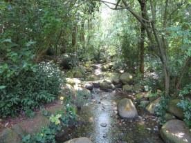 CBM Garden. 12
