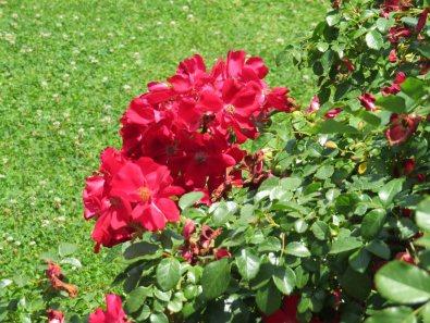 CBM Garden 4